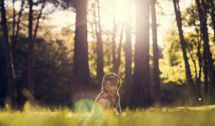 Comfort and Protection: Dog Hoodies - Post Thumbnail